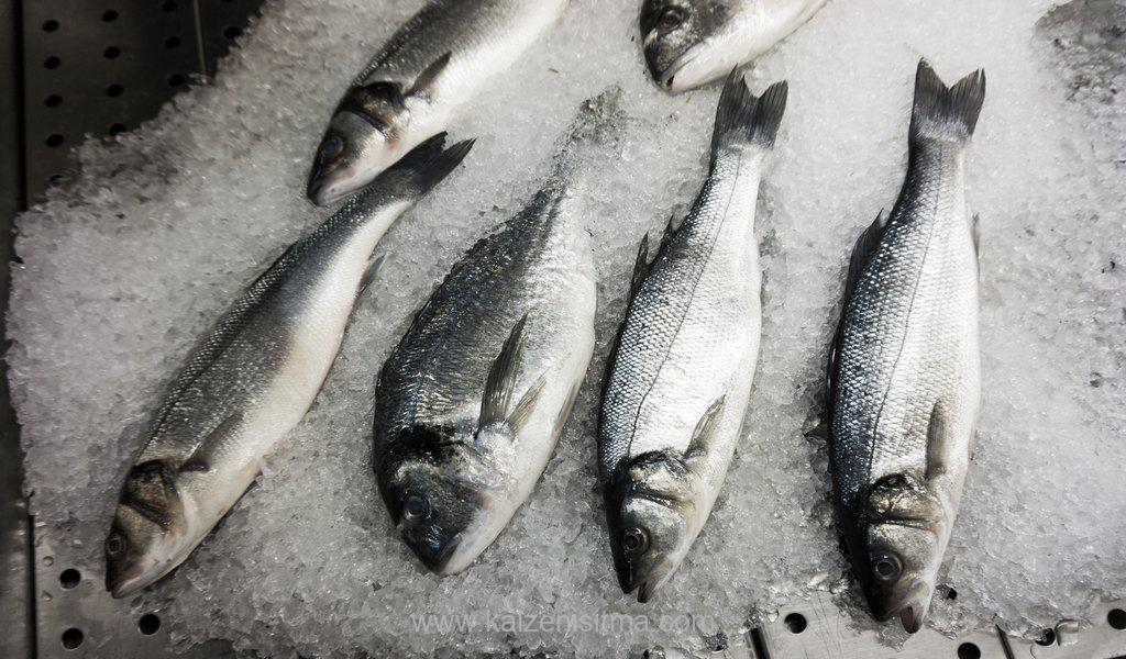 fresh fish on ice - fresh fish on ice v 1576177027 - Latest news